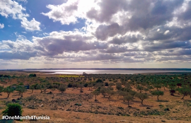 #OneMonth4Tunisia | Post25 Come with me and let's take a walk through those Olive trees and have some quality time under the warm spring sun in front of that lake <3 إيجا معايا و هيا نتمشّاو ونعملو دورة مزيانة بين شجر الزّيتون و نعملو قعيدة حلوّة تحت شمس الرّبيع الدّافية قدّام كالبحيرة ^_^ Place: Sousse | Achraf Aouadi©